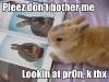 bunny-porn-thumb