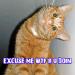 cat-wtf-r-u-doin