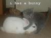 i-has-a-bunny
