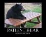 patient-bear